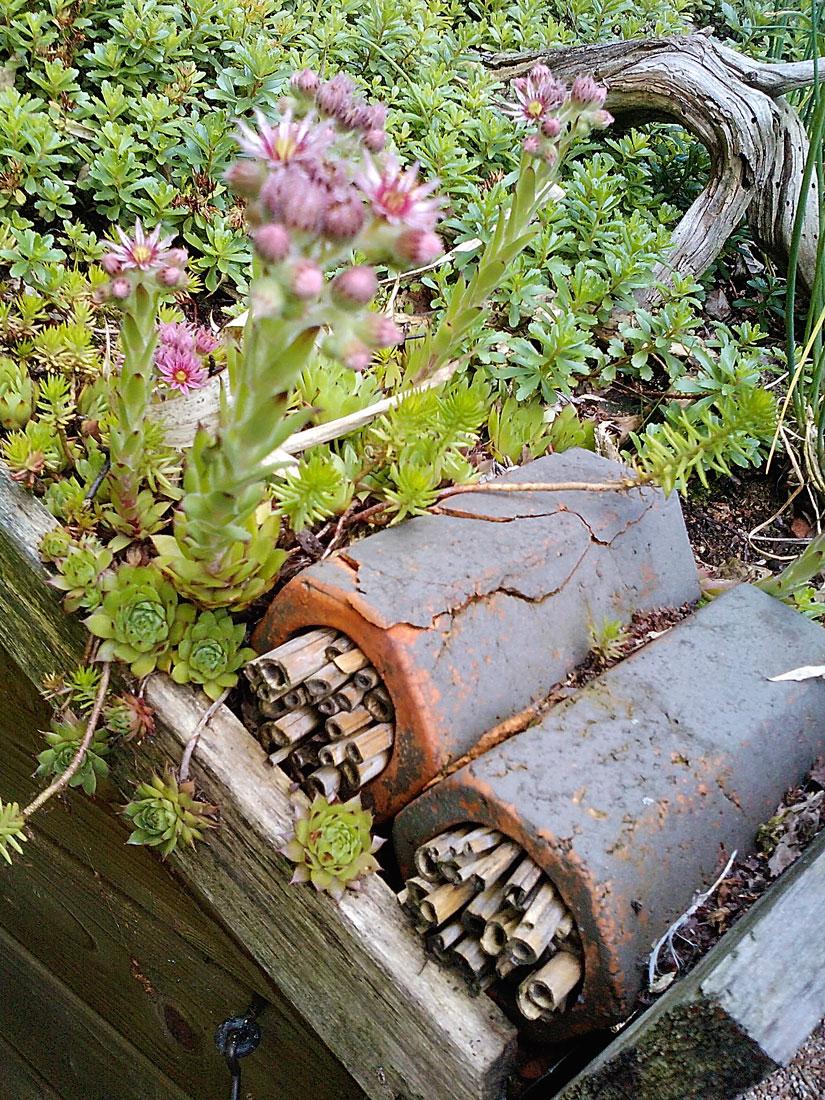 Nisthilfe für wilde Bienen