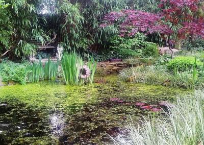 Der Teich in meinem Garten
