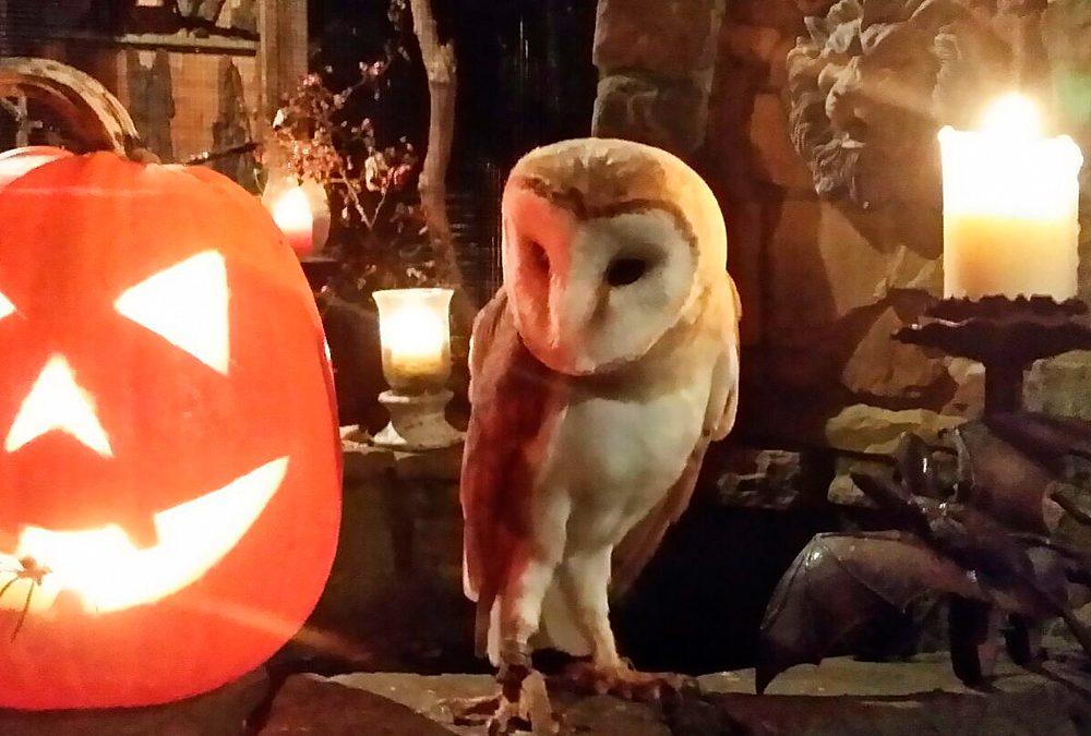 Halloween-Stimmung am Löwenbrunnen